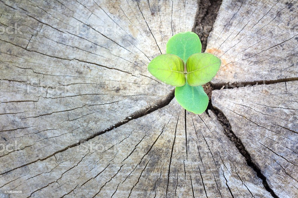 Seedling growing in a timber ,Focus on seeding royalty-free stock photo