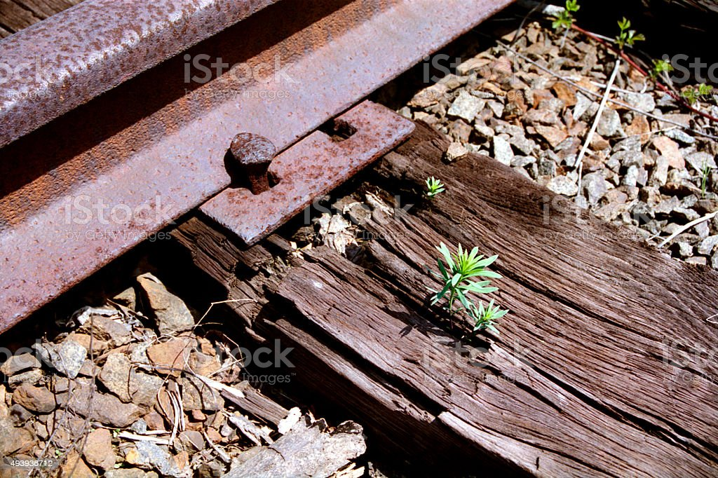 Seedling Growing out of a Railroad Tie stock photo