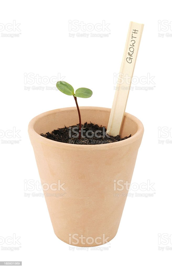 Seedling in a flowerpot, labelled as growth royalty-free stock photo