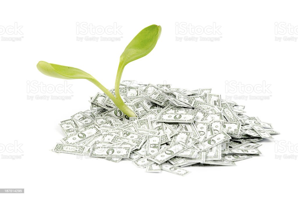 Seedling in a pile of Dollar notes royalty-free stock photo