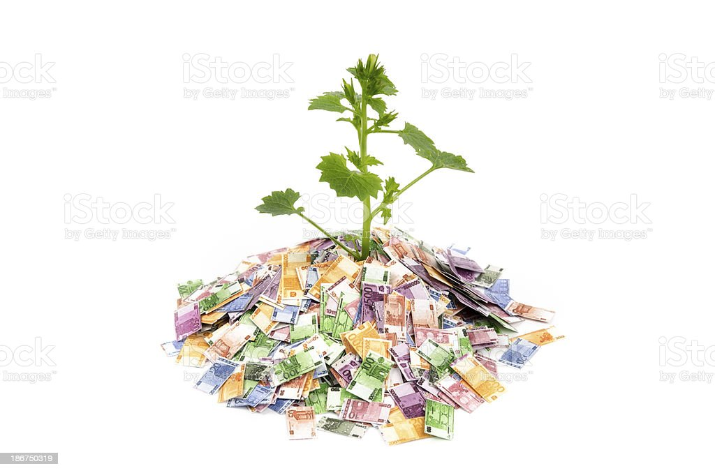 Seedling in a pile of Euro notes royalty-free stock photo