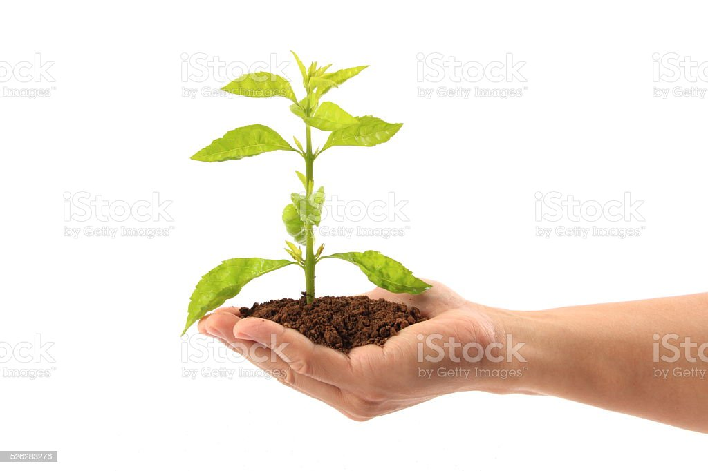 Seedling in hand stock photo