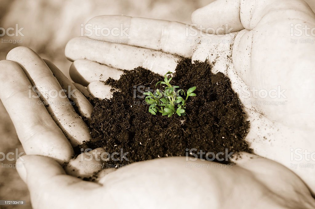 Seedling in hands 2 royalty-free stock photo