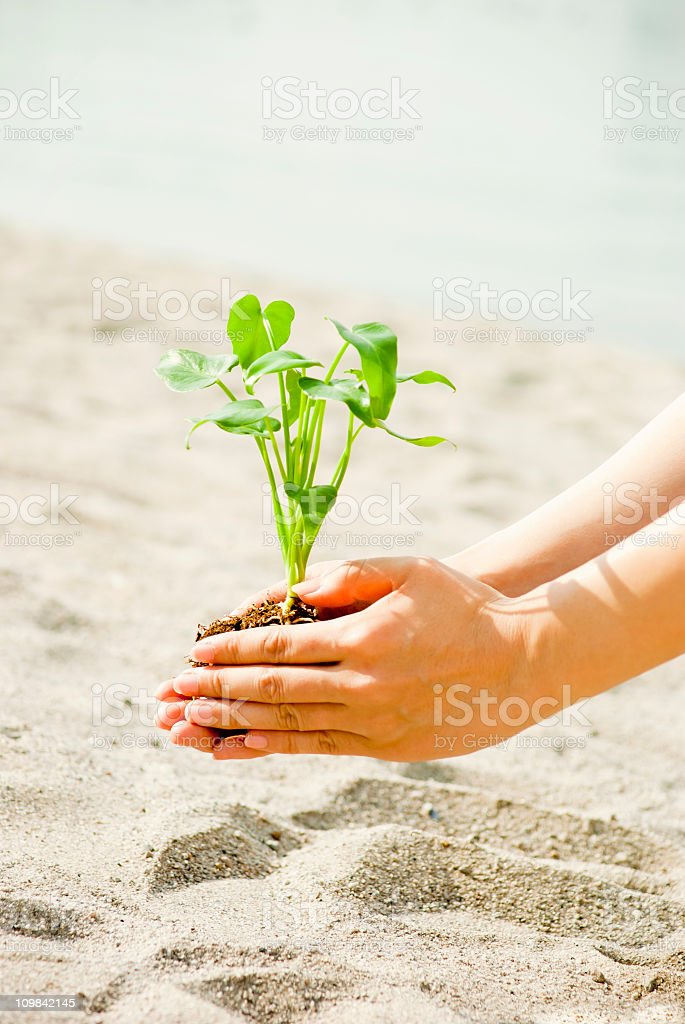 Seedling in hands - Environmental conservation concept stock photo