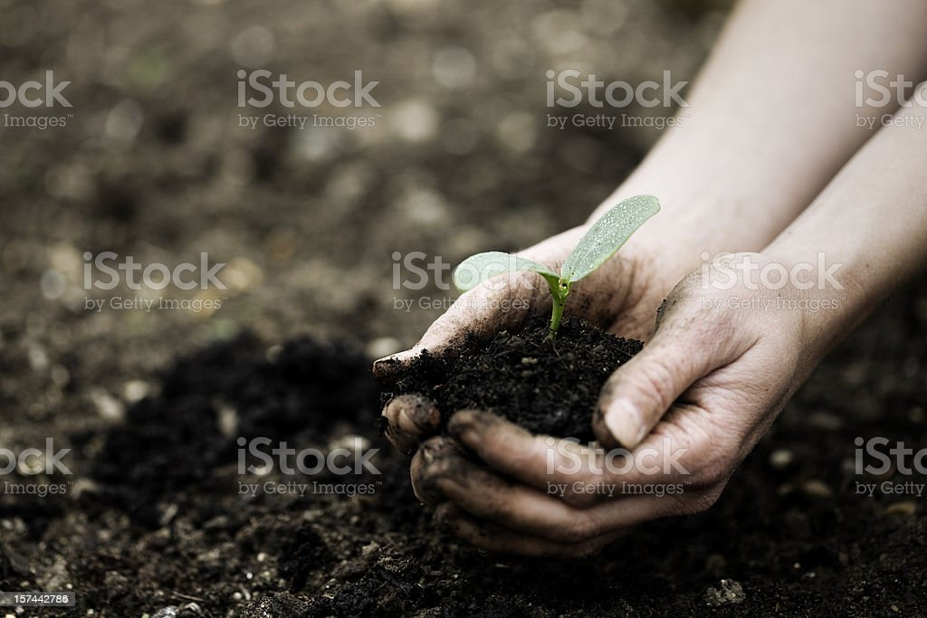 Seedling in hands royalty-free stock photo