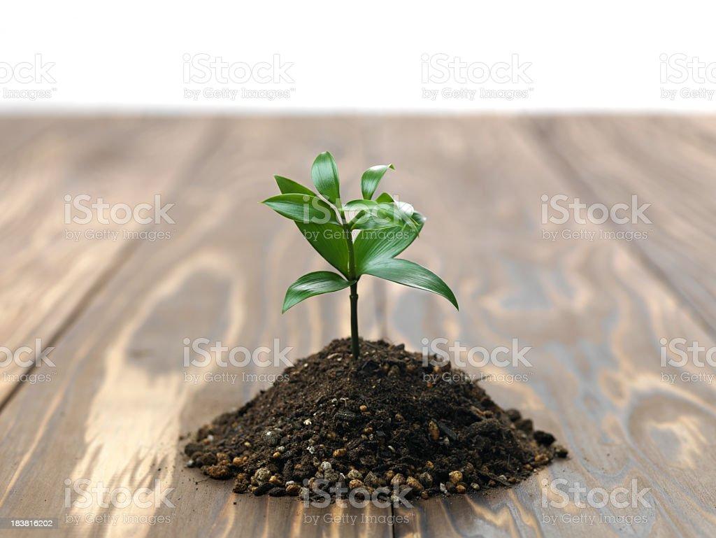 Seedling of one bunch stock photo