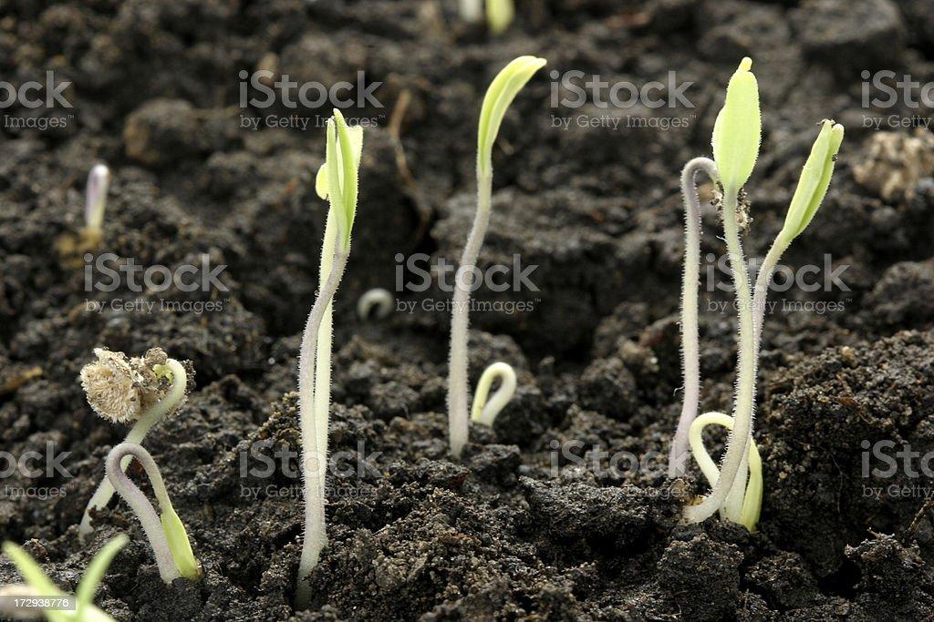 Seedling stock photo