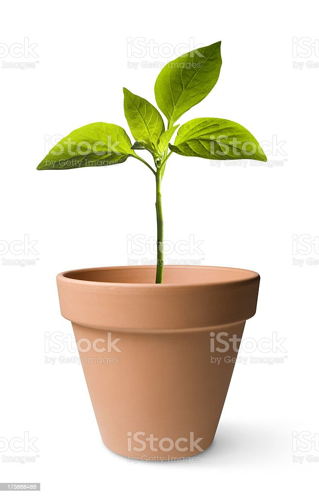 Seedling royalty-free stock photo