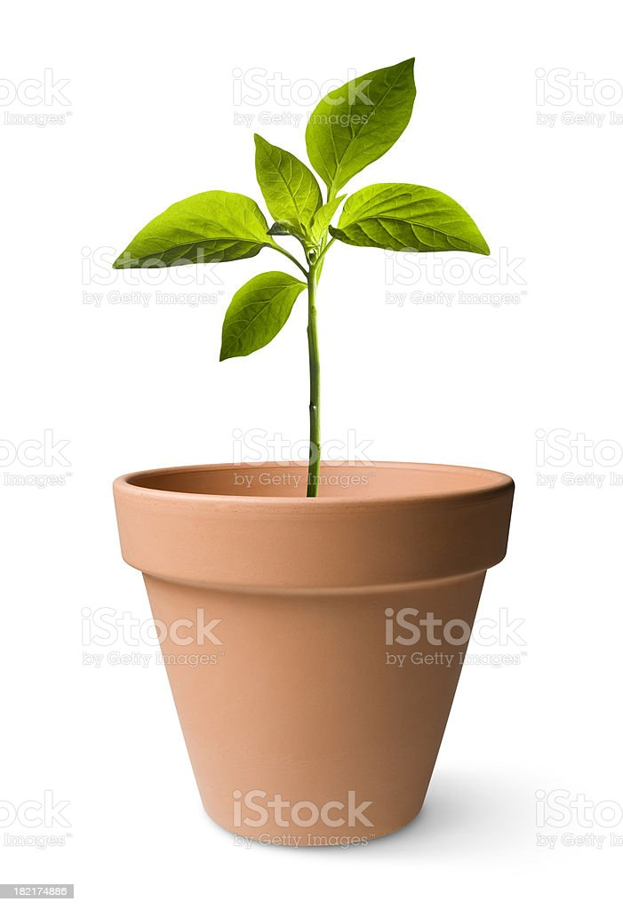 Seedling stock photo