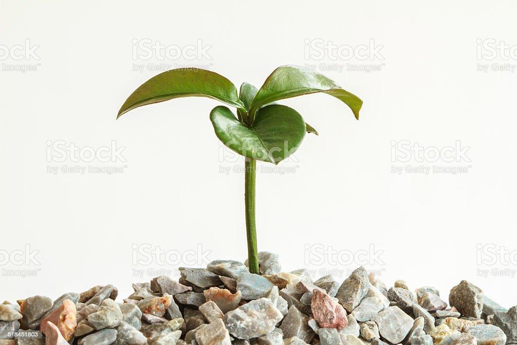 Seedling plant stock photo
