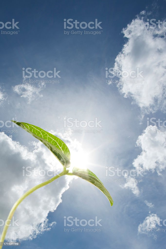 Seedling with dramatic sky backdrop. royalty-free stock photo