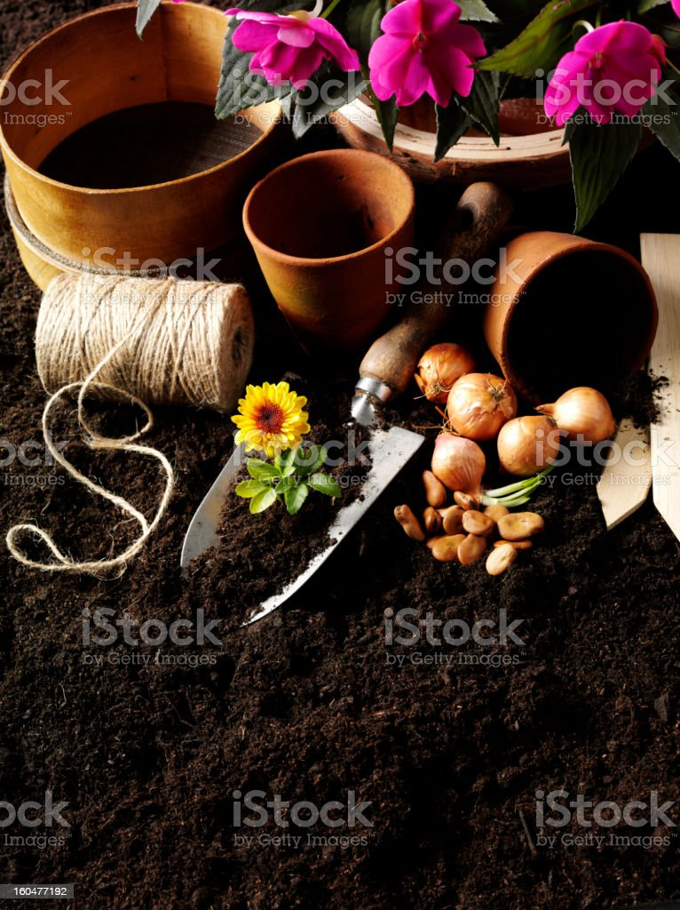Seedlings and Bulbs in the Garden royalty-free stock photo