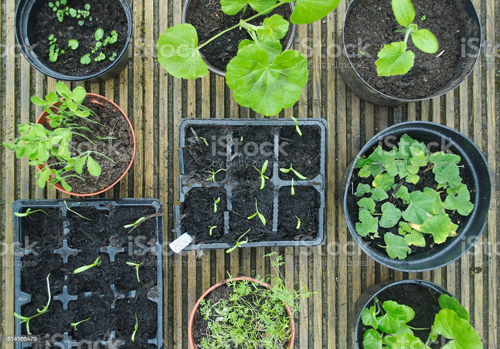 Seedlings and cuttings stock photo