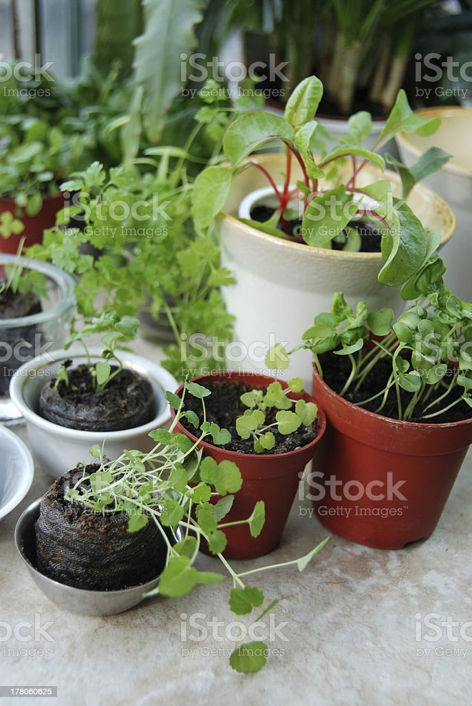 Seedlings collection royalty-free stock photo