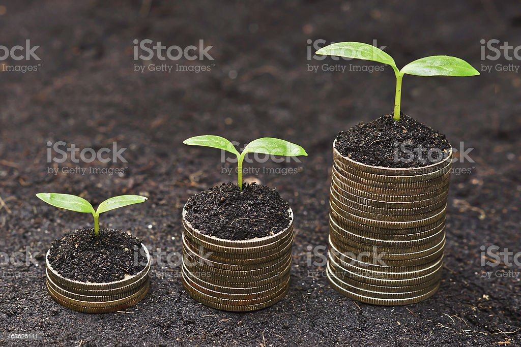 Seedlings coming out of the top of a few stacks of coins stock photo