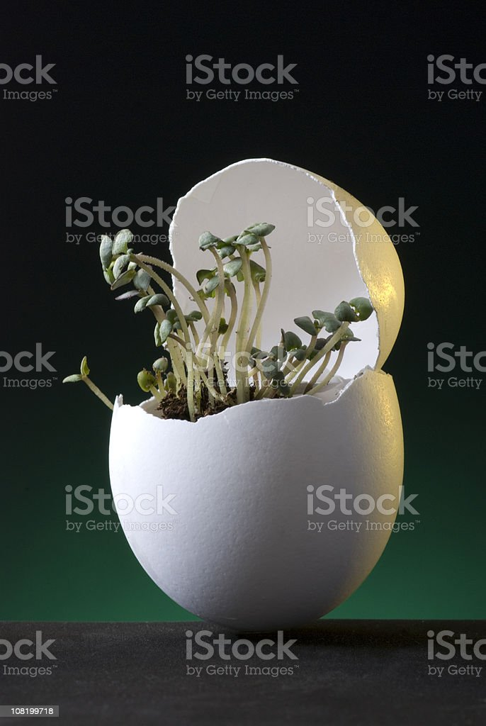 Seedlings Growing Out of Cracked Egg Shell royalty-free stock photo