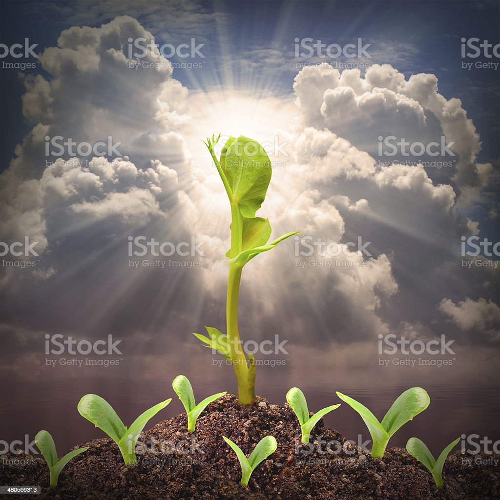 Seedlings growth. stock photo