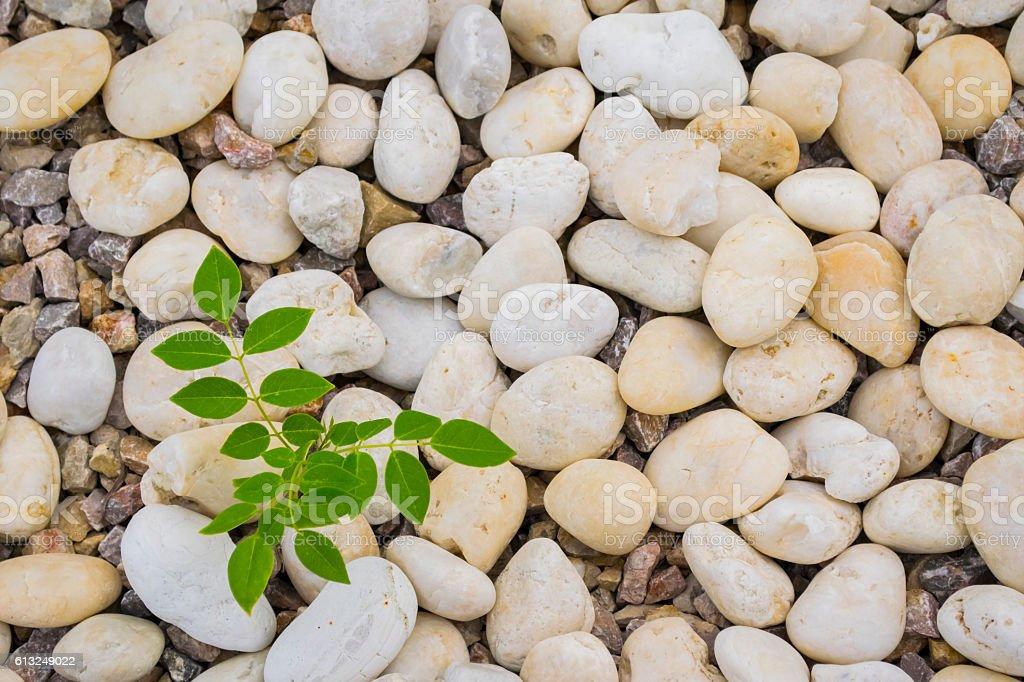 seedlings. stock photo