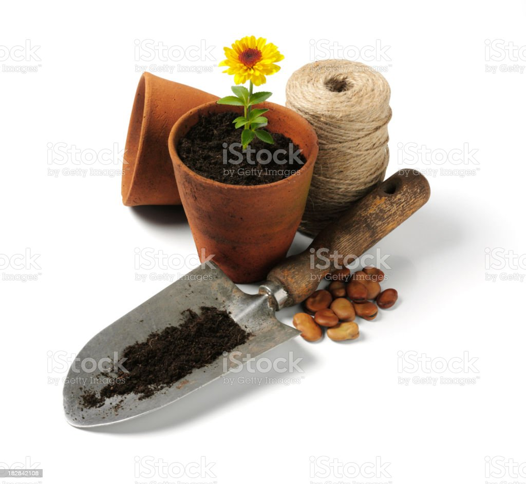 Seeds and Flowers in Growth royalty-free stock photo