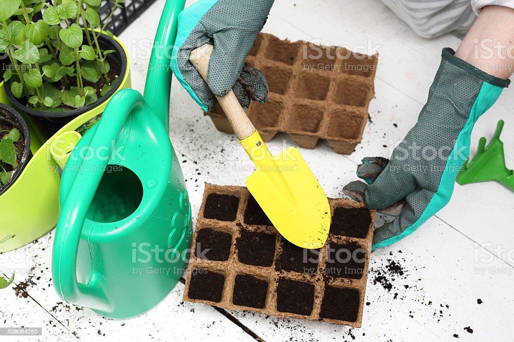 Seeds, gardener prepares the seedlings stock photo
