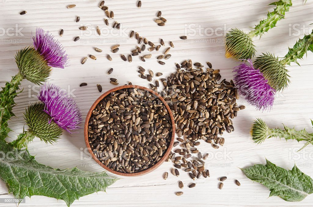 Seeds of a milk thistle with flower on wooden table stock photo
