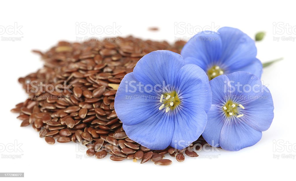 Seeds of flax with flowers stock photo