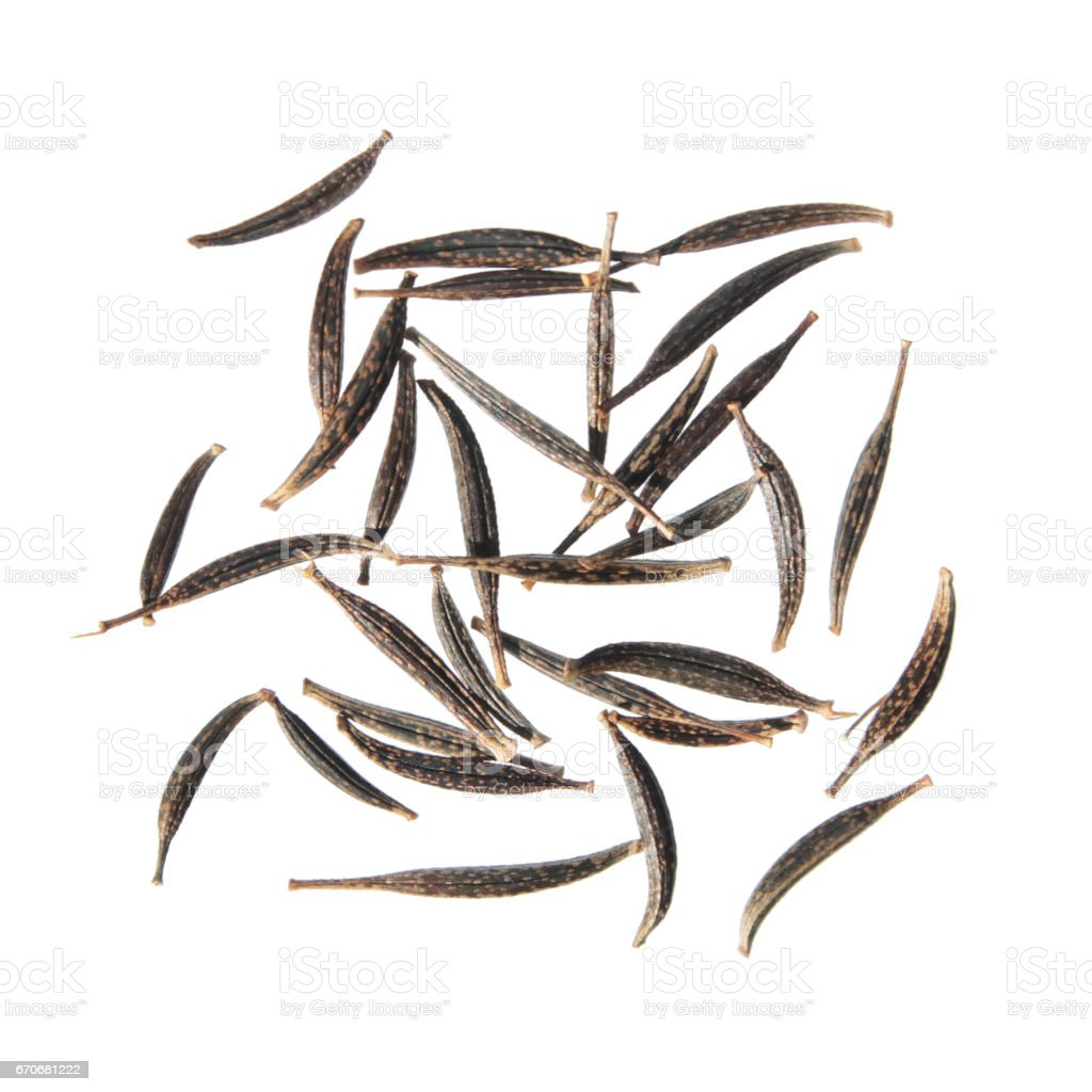 Seeds of garden cosmos (Cosmos bipinnatus) isolated on white background stock photo