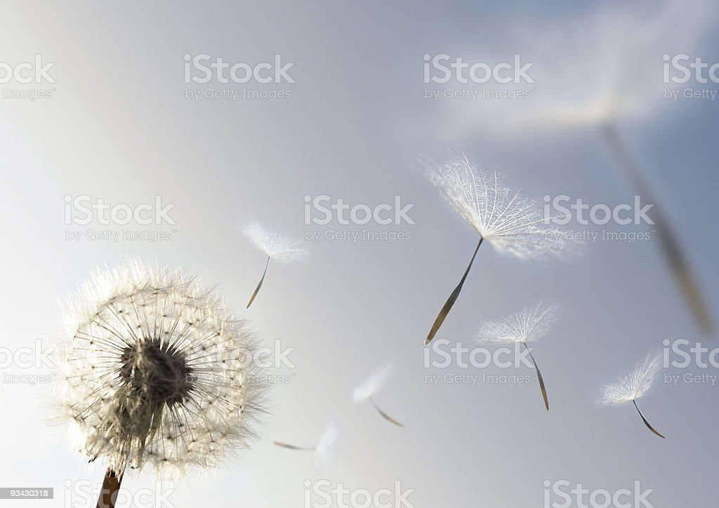 Seeds of Growth royalty-free stock photo