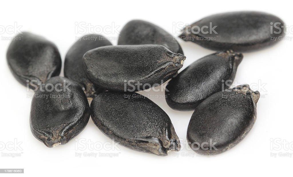 Seeds of ridge gourd stock photo