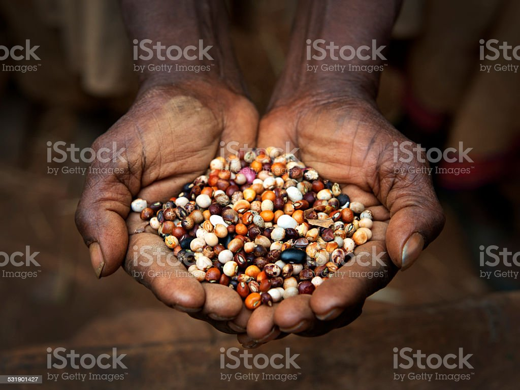 Seeds of the earth stock photo