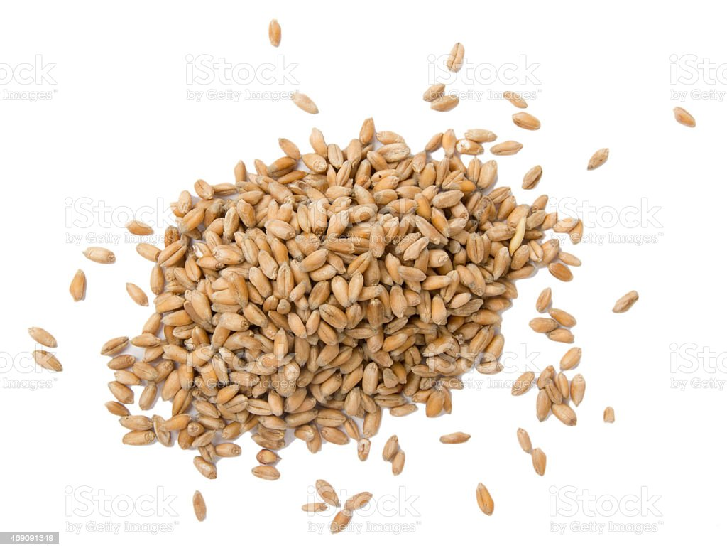 Seeds of wheat against a white background stock photo
