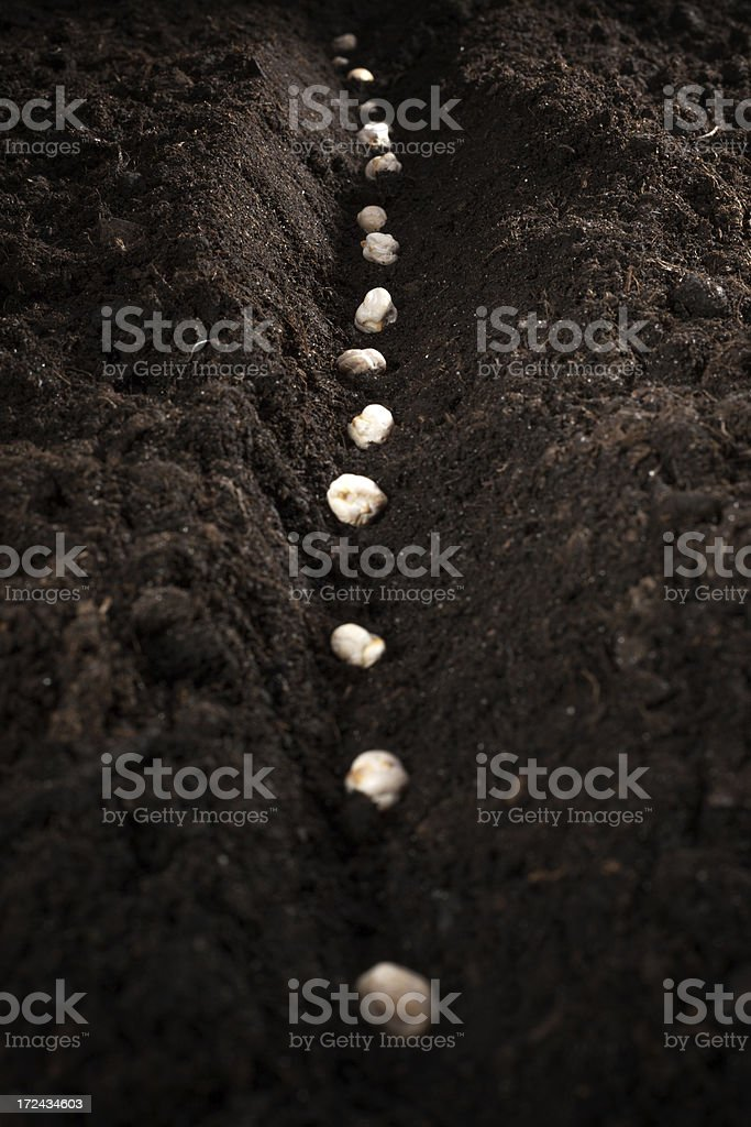 Seeds on the ground royalty-free stock photo