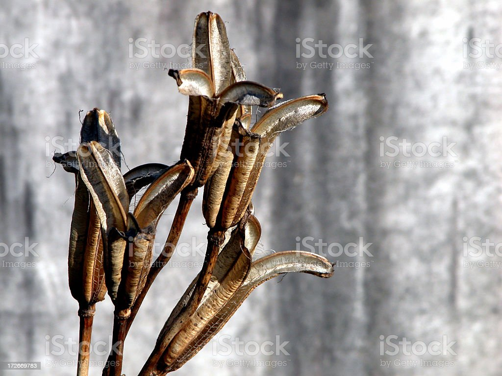 Seeds over Grave royalty-free stock photo
