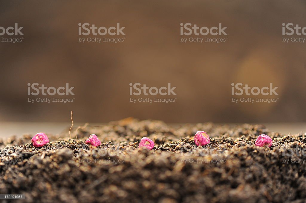 Seeds sown on earth royalty-free stock photo