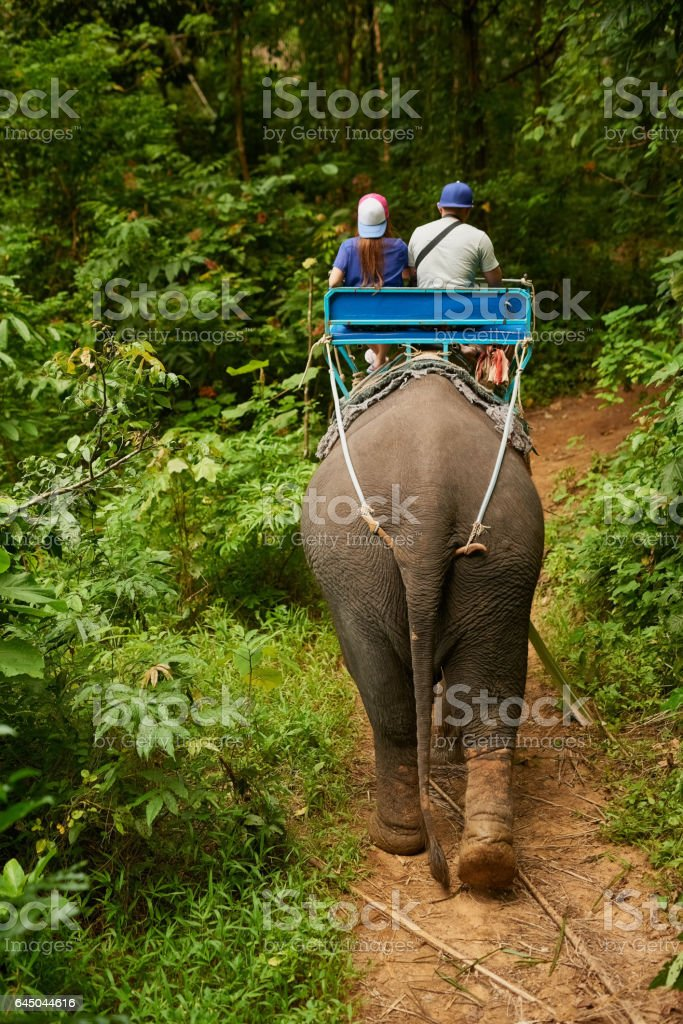 Seeing the jungle in a new way stock photo