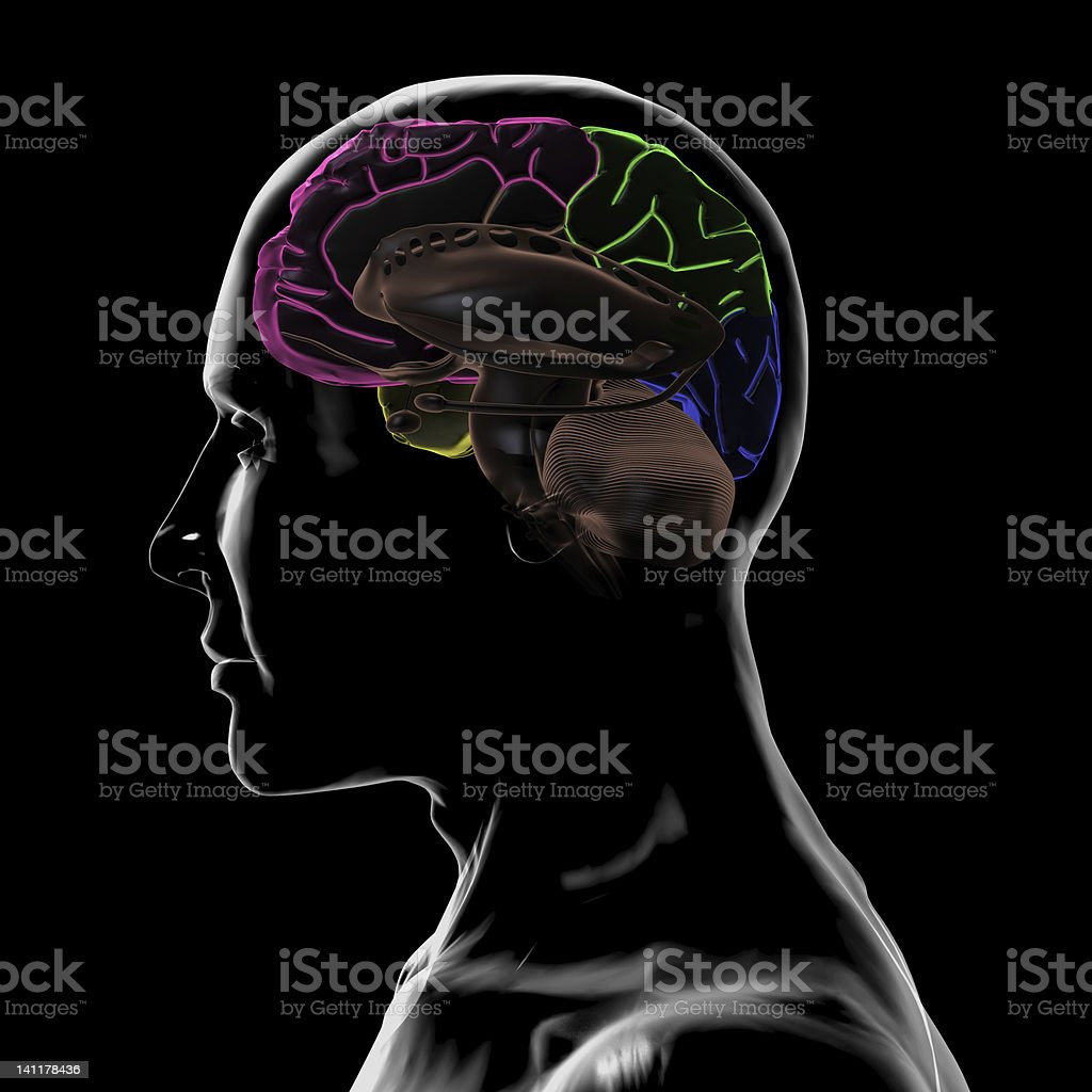 See-Through inside Left-side of the head and Brain stock photo