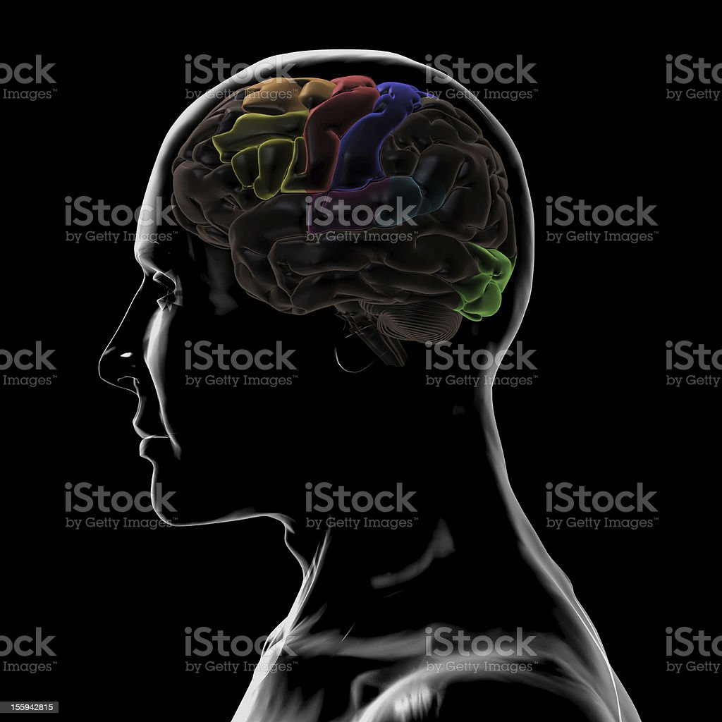 See-Through Left-side of the head and Brain stock photo