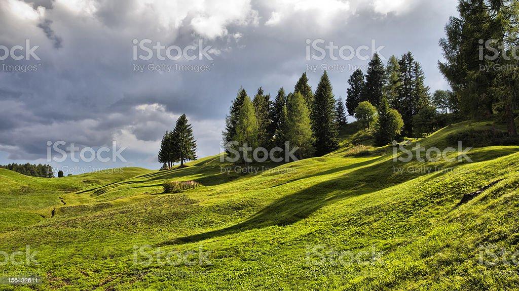Seiser Alm (Dolomites) - Pine trees on high mountain stock photo