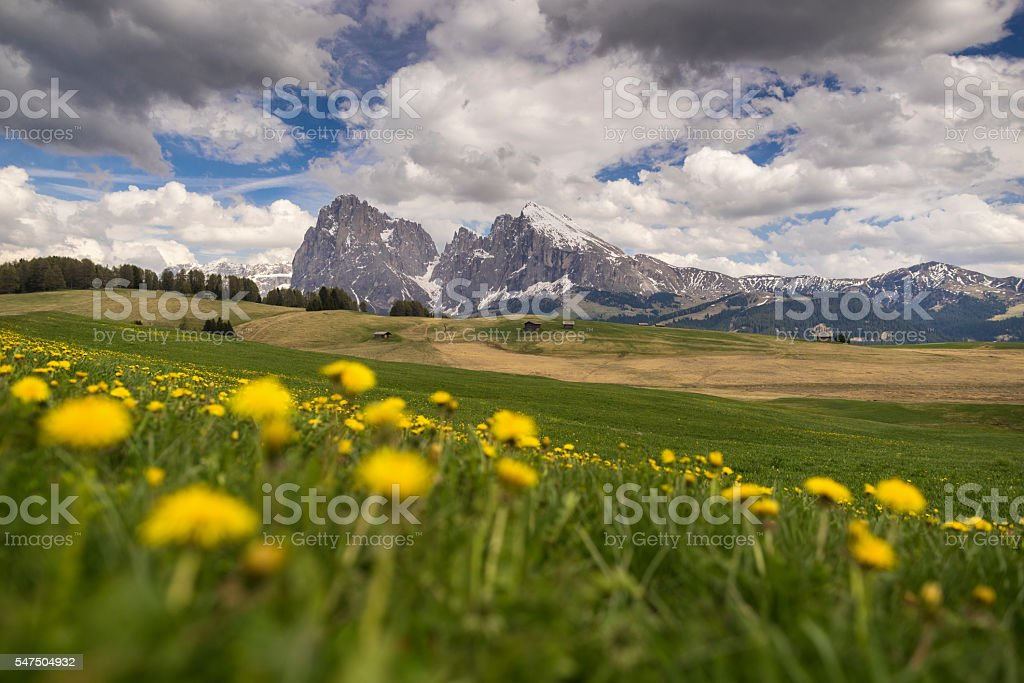 Seiser Alm with the Langkofel and the Plattkofel in background stock photo
