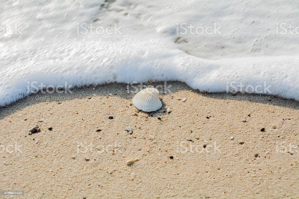Wählen Sie den Fokus von Muscheln und Meer verwischen-Blase Lizenzfreies stock-foto