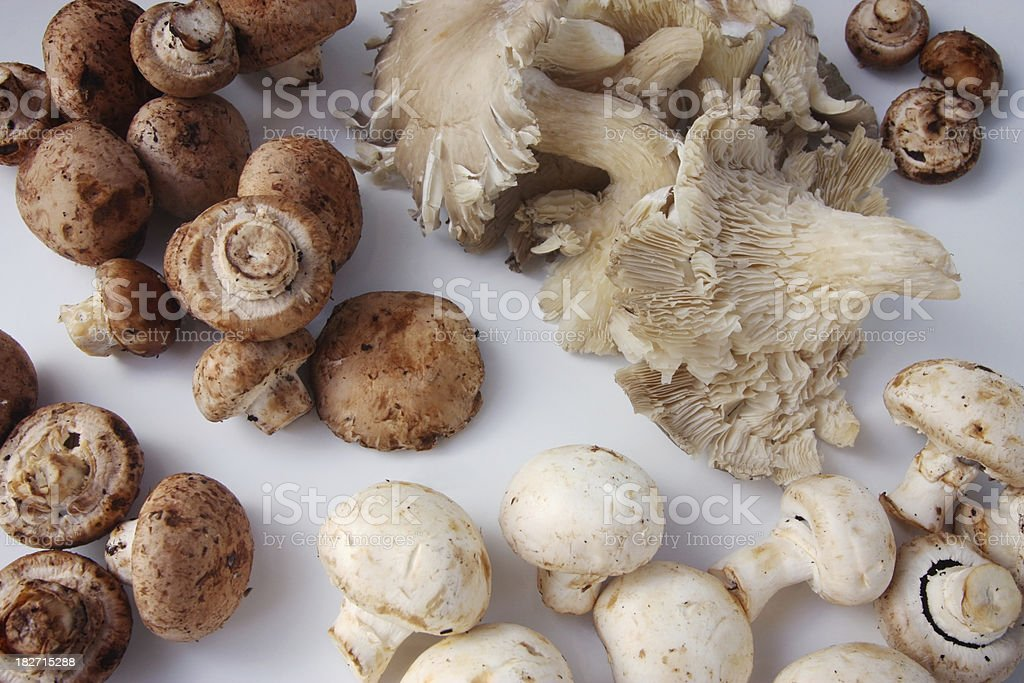 Selection of Fresh Organic Mushrooms royalty-free stock photo