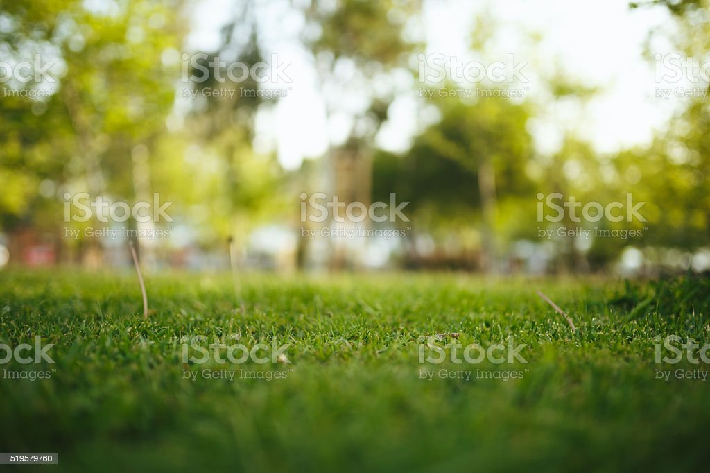 Selective focus grass in park stock photo