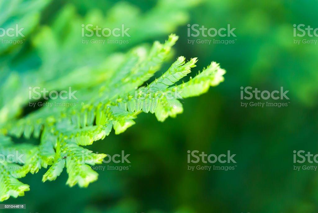 selective focus macro fern on bokeh and defocus lights background stock photo