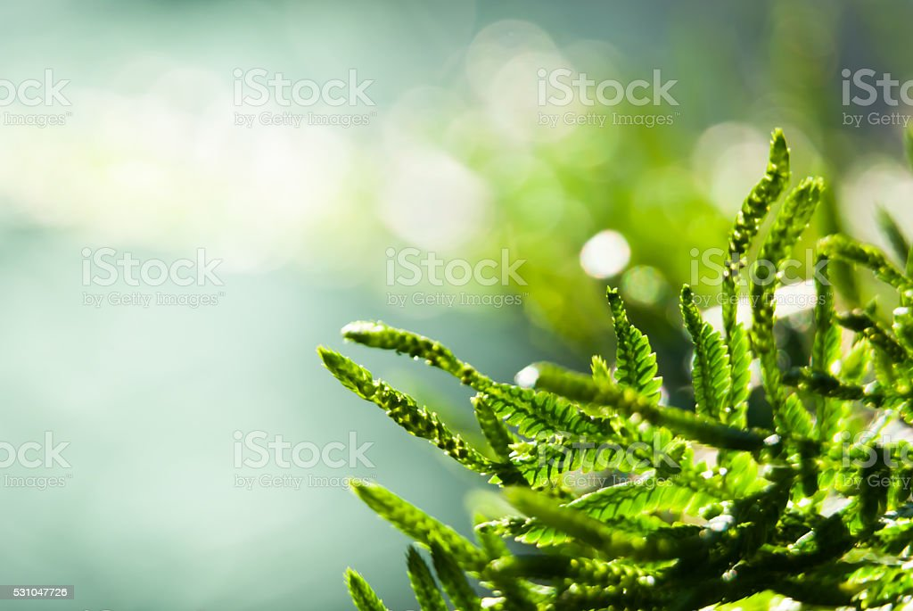selective focus macro fern on bokeh and defocus lights background stock photo