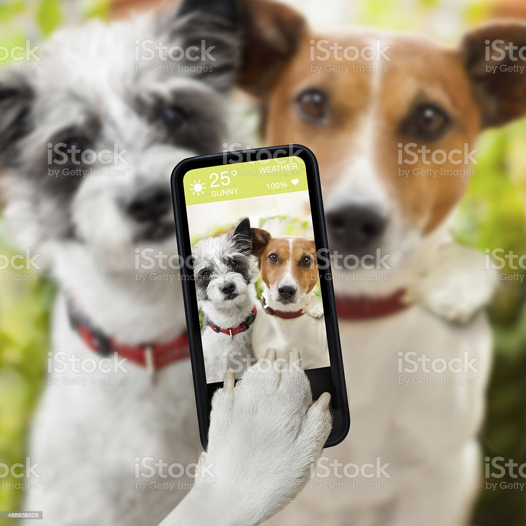 selfie dogs stock photo