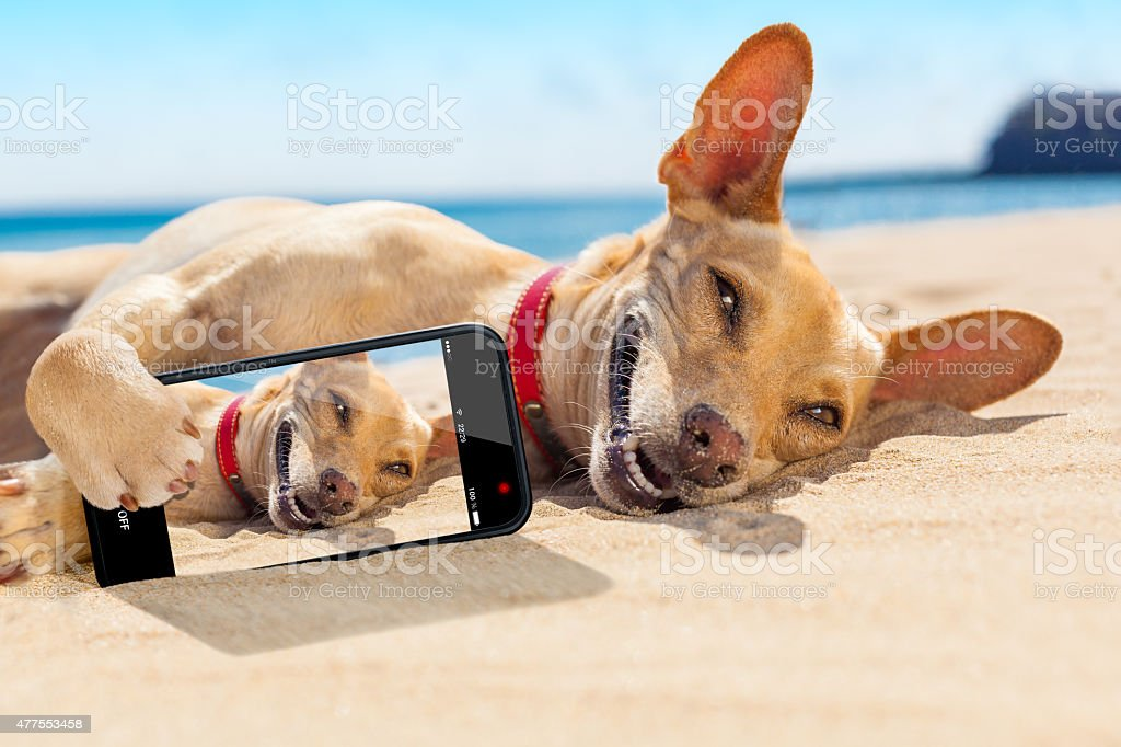 selfie summer dog stock photo
