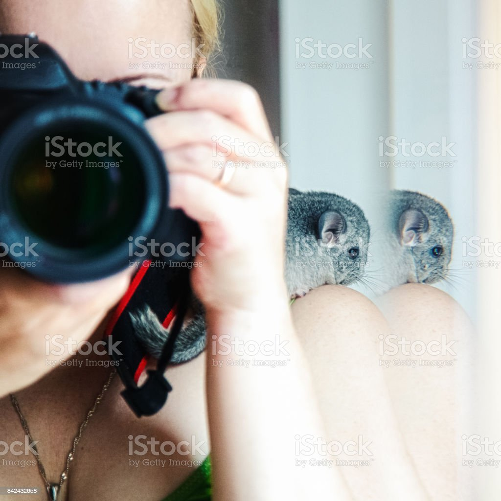 A selfie with a camera and a chinchilla stock photo