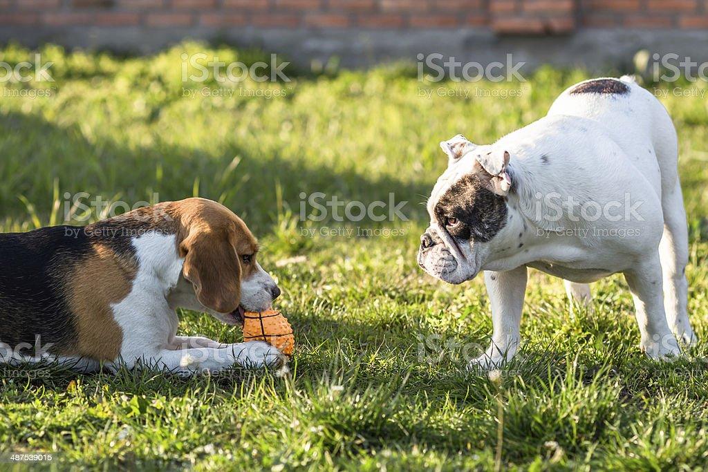 Selfish and greedy dog stock photo
