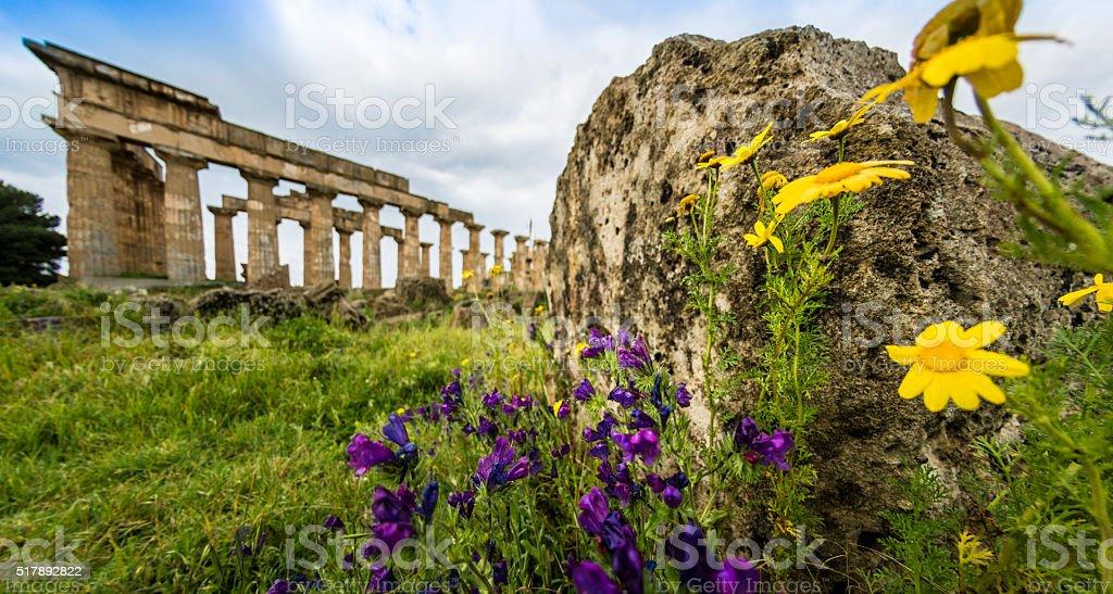 Selinunte Yellow Flower stock photo