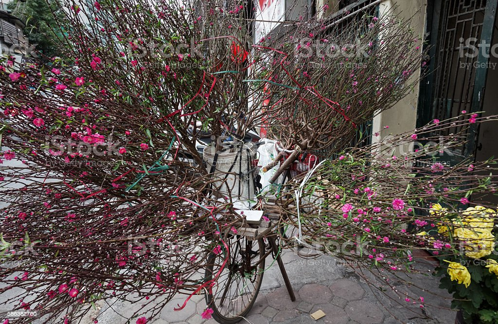 Selling branches of peach trees with flowers stock photo